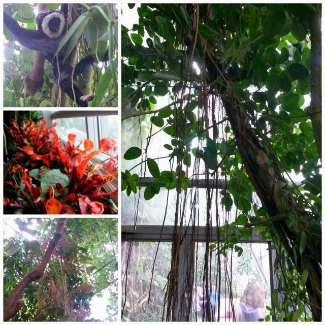 Gardenia3 Collage