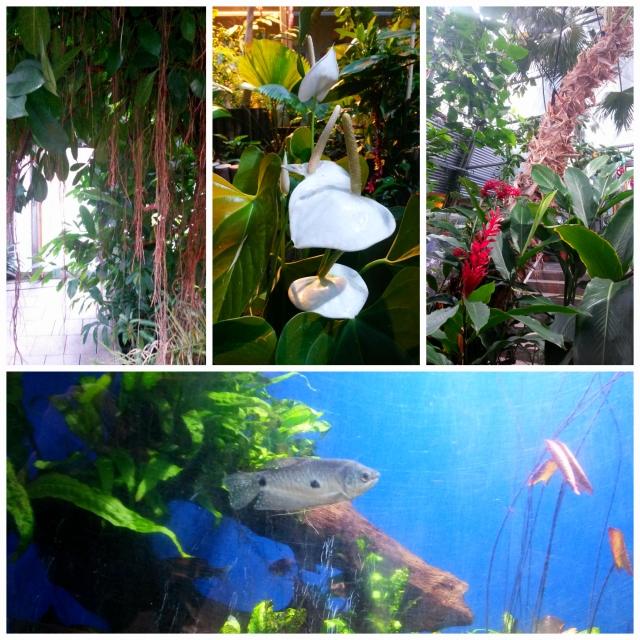 Gardenia4 Collage
